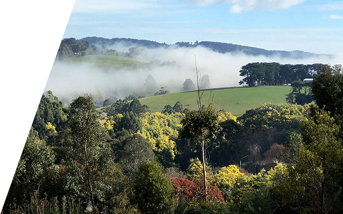 A view of the dandenongs
